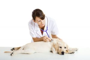 Load Factors in a Veterinary Office Lease | Female veterinarian checking a Golden Retriever