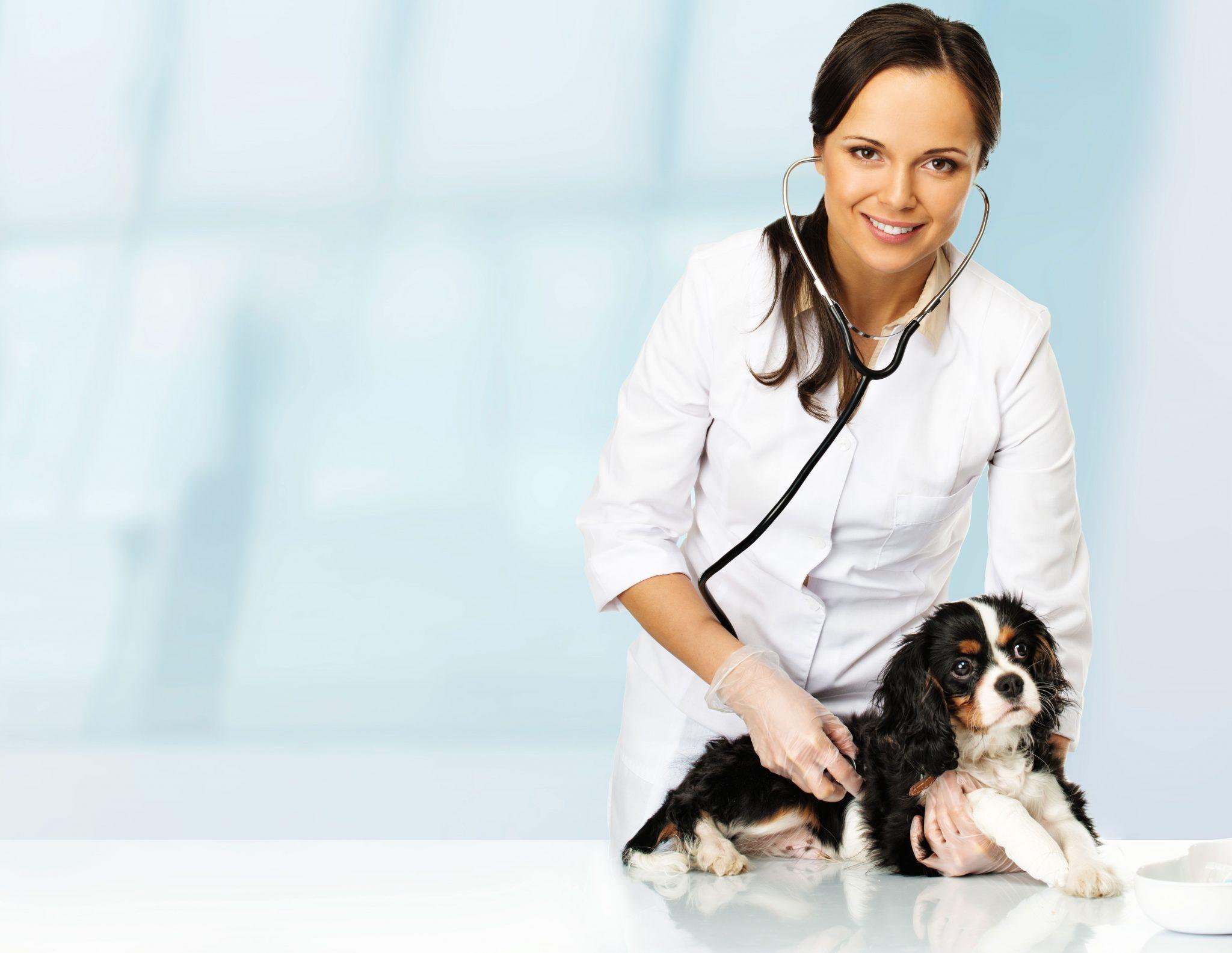 Картинка ветеринар девушка