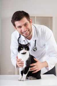 Male veterinarian with a black and white cat